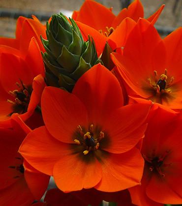 Orange pot